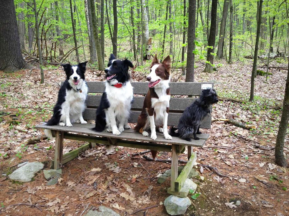 4 dogs on a bench