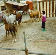 Pferde 1989