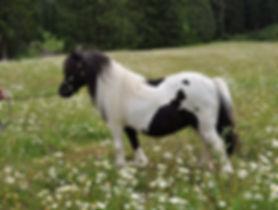 Blackerttor Ariadne