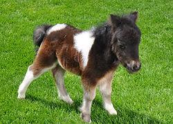 Pony. 24. 04. 2020, 20208 14:08:06 111.j