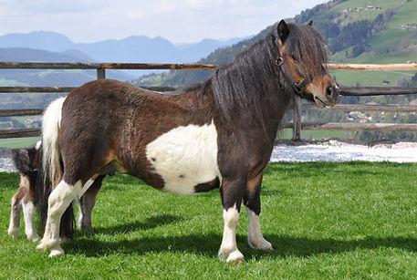 Pony. 24. 04. 2020, 20208 14:08:06 99.jp