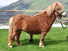 Pony.%252024_edited.jpg