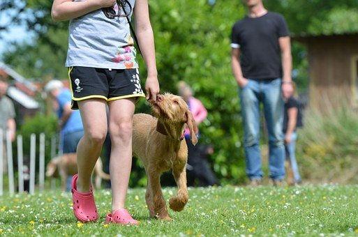 dog-school-662761__340.jpg