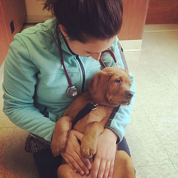 Integrative Veterinary Service - Our Mission