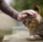 Home Euthanasia for cats and dogs
