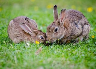 Toolbox Tuesday: Bunnies Hop, Books Do Not