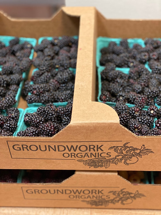 marionberryflats.jpg