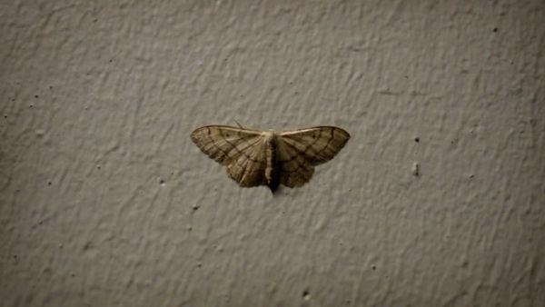 _600x338_butterfly.jpg