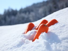 Carrots from Under the Snow