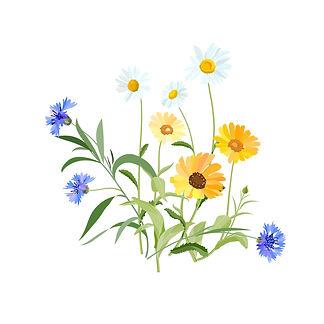 flowers-2082494_1920.jpg