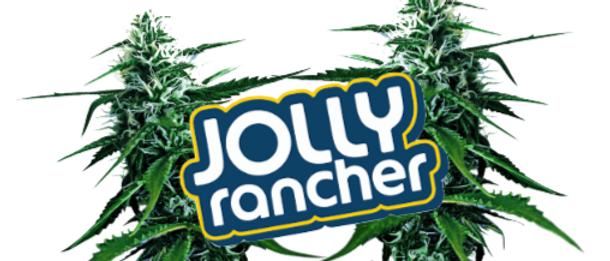 Jolly Rancher Hoodie