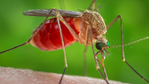 August 11th - First mosquitoes test positive for West Nile virus