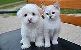 PuppyKittenPhoto.jpg