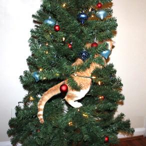 Feline Friendly Holidays