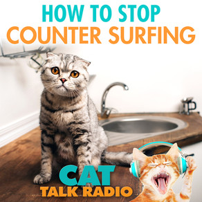 Counter Surfing - How to Stop It