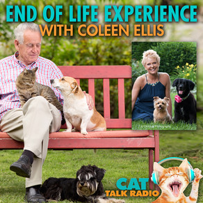 End of Life Experiences