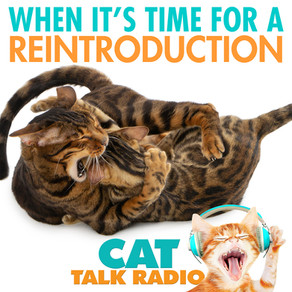 Cat Reintroductions - Why & when you should do it