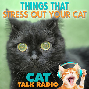 What Stresses Out Your Cat?