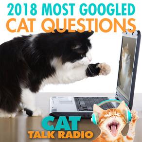 Most Googled Cat Questions of 2018