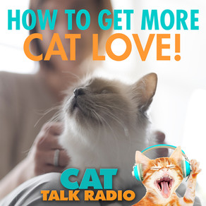 How to Get More Cat Love!