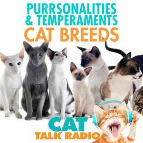 Purrsonalities & Temperaments of Cat Breeds