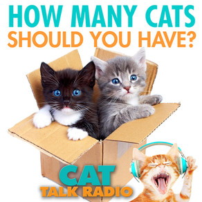 How many cats should you have?