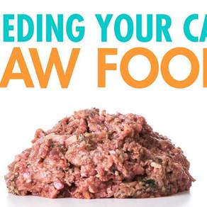 Feeding Your Cat Raw Food