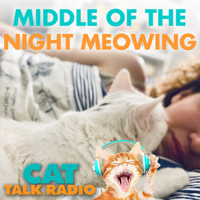 Middle of the Night Meowing