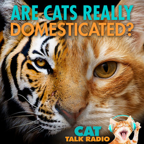 Are Cats Really Domesticated?