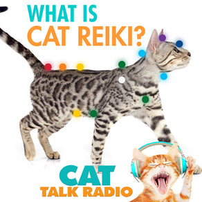 What is Cat Reiki?