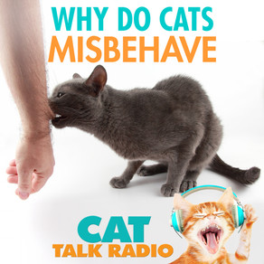 Why Cats Misbehave