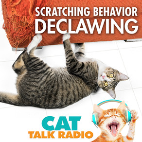 Scratching Behavior - Declawing & Non-Surgical Alternatives