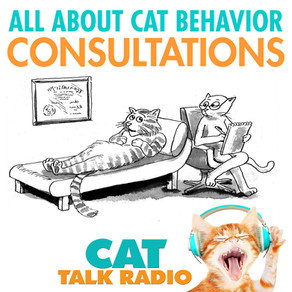 All About Cat Behavior Consultations