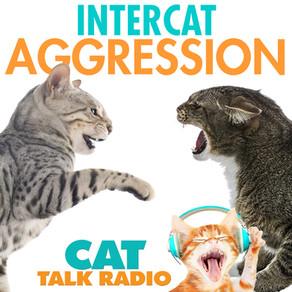 Intercat Aggression