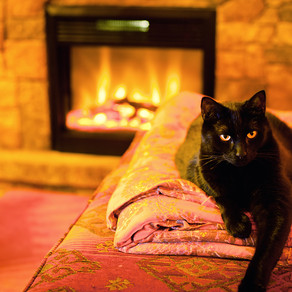 Creating a Cozy Space for your Cats