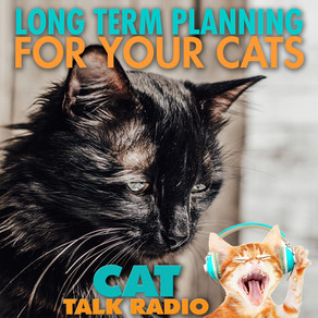 Long Term Planning for Your Cat
