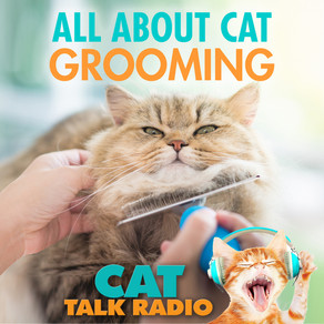 All About Cat Grooming