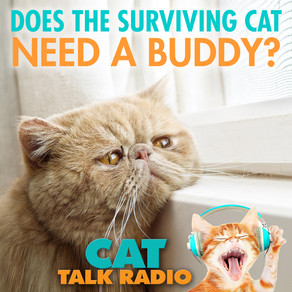 The Surviving Cat - Does He Need a New Buddy?
