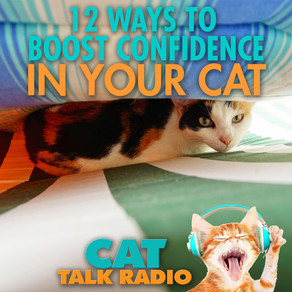 12 Ways to Boost Confidence in Your Cat