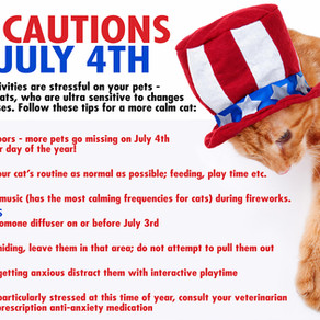 Cat Cautions for July 4th