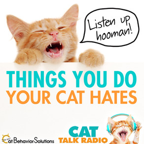 34 Things You Do Your Cat Hates