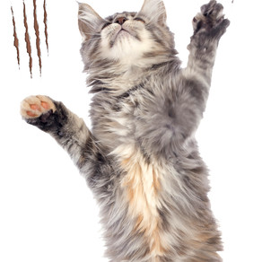 Scratching/Clawing - Successful behavior modification strategies