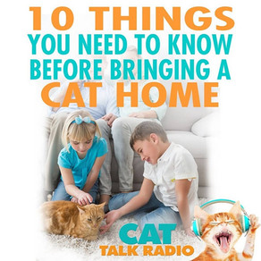 10 Things You Need Before Bringing Home A Cat