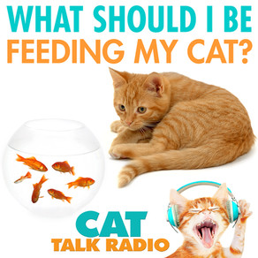 What to Feed Your Cat
