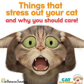 Things That Stress Your Cat Out and Why You Should Care
