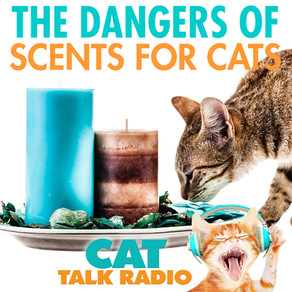 Dangerous Scents for Cats