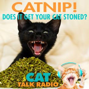 Catnip - Does it get my cat stoned?
