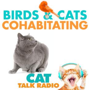 Cats & Birds Cohabitating