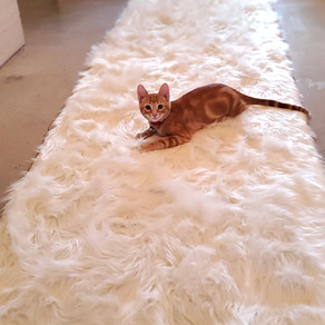 Washable Rugs!!