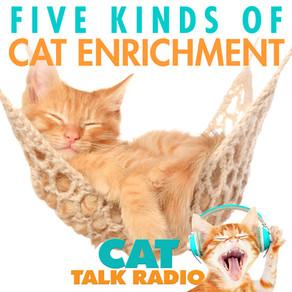 5 Kinds of Cat Enrichment
